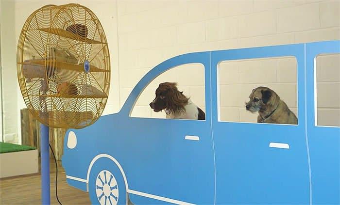 expo pour chiens 1