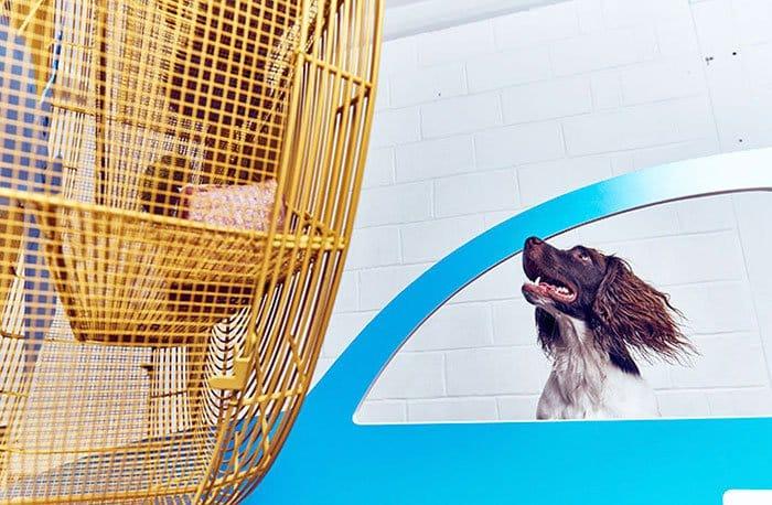 expo pour chiens 2