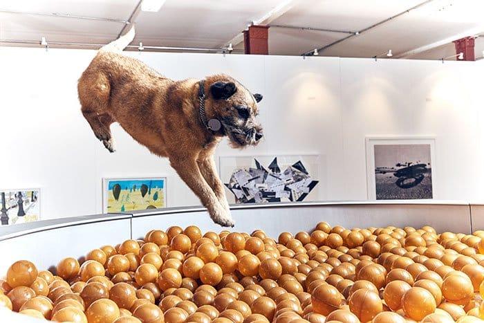 expo pour chiens 3