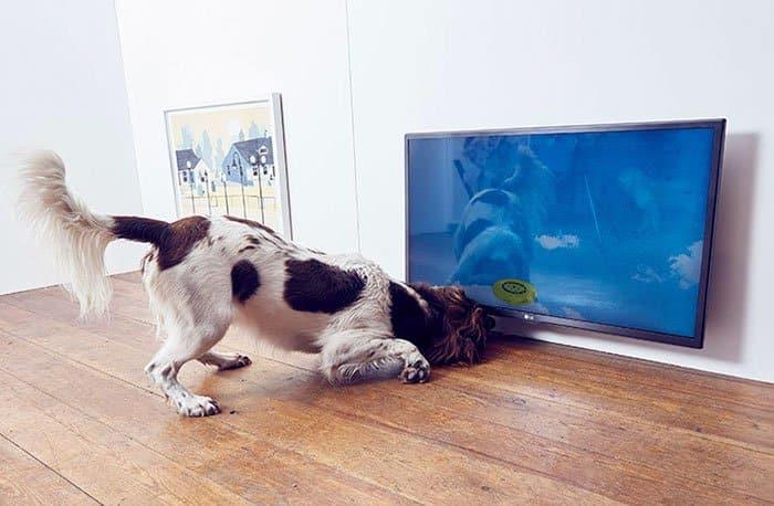 expo pour chiens 4