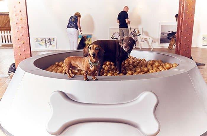 expo pour chiens 5