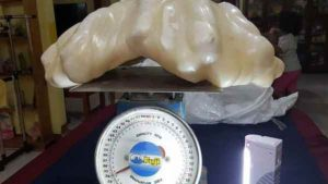 perle-grosse-2