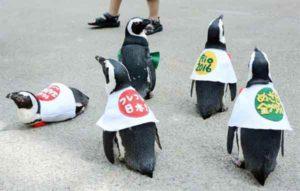 pingouins-rio