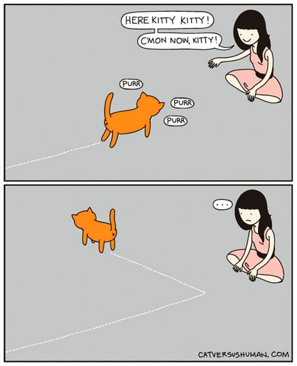 vie avec chat 1