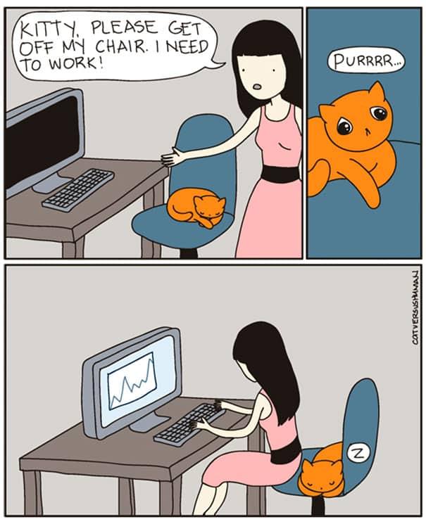 vie avec chat 11