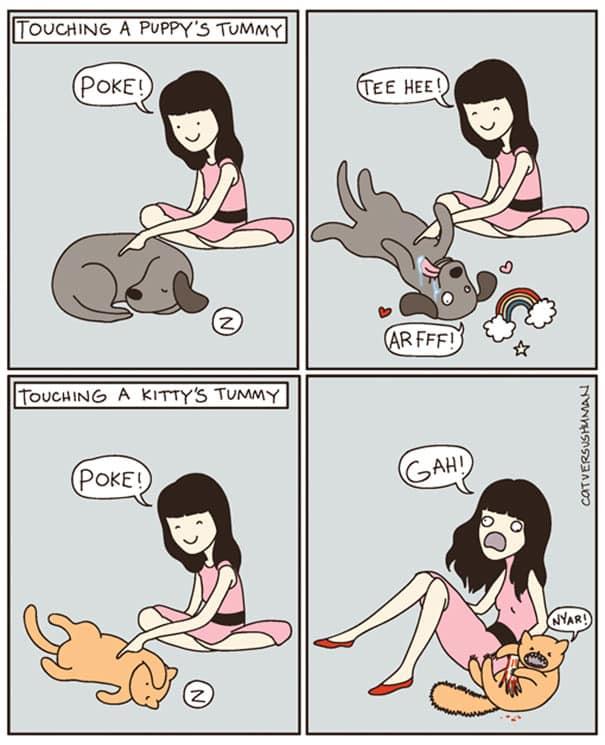 vie avec chat 4