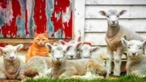chat-et-guide-spirituel-1