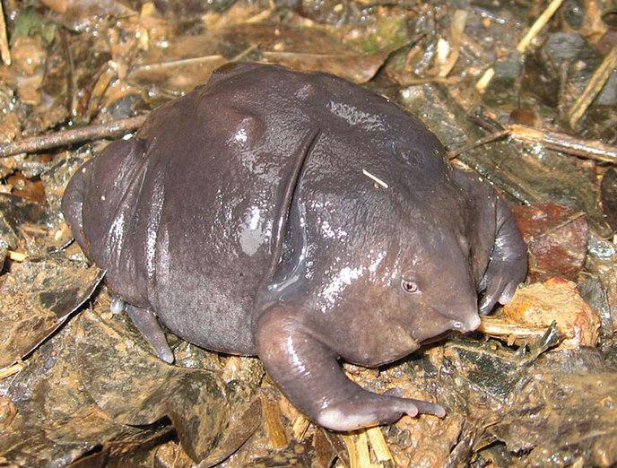 la-grenouille-violette-dinde-2