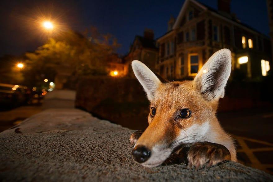 Wildlife Photographer 2