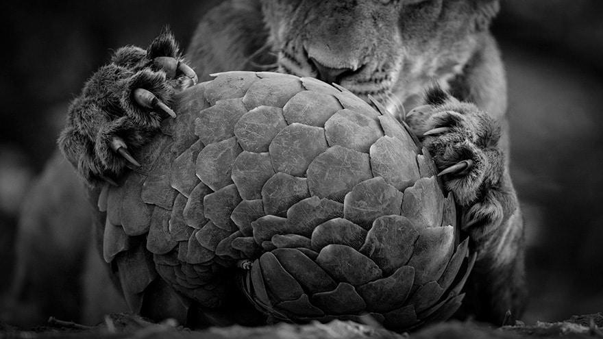 Wildlife Photographer 5