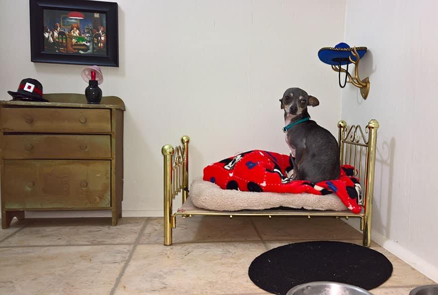 chambre de chien 3