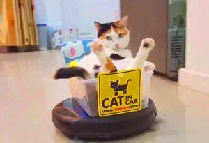 chat-aspirateur-une