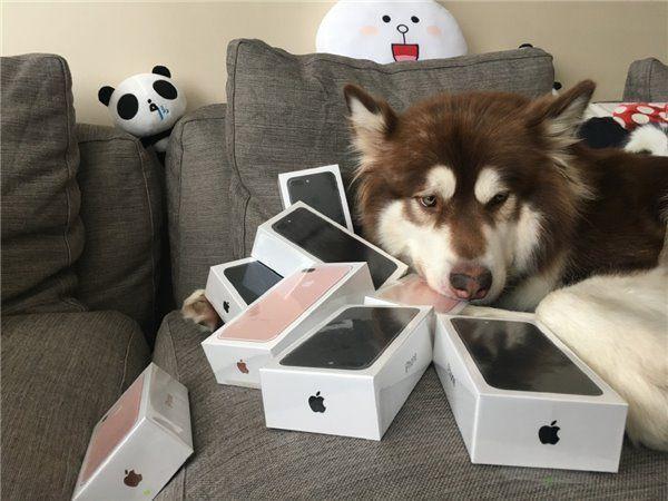 chien-iphone