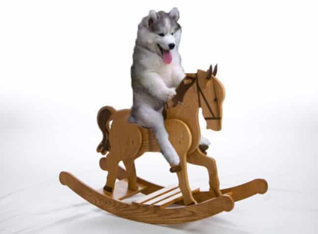 chien-perche-1