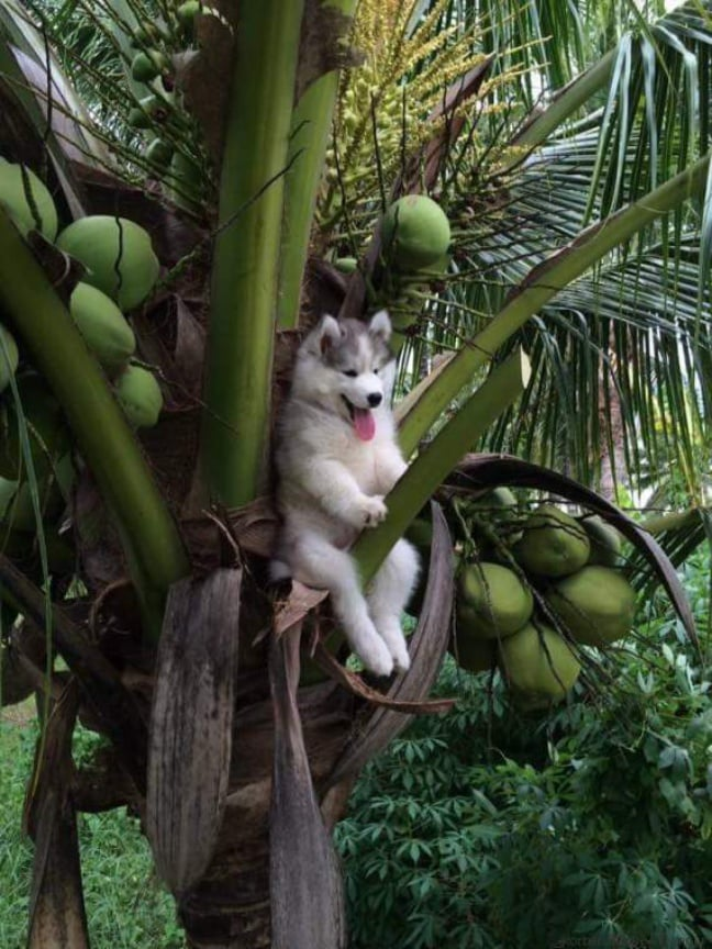 chien-perche