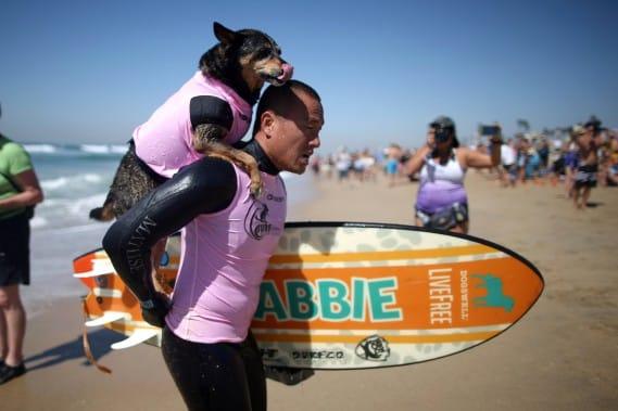 chiens-surfs-2
