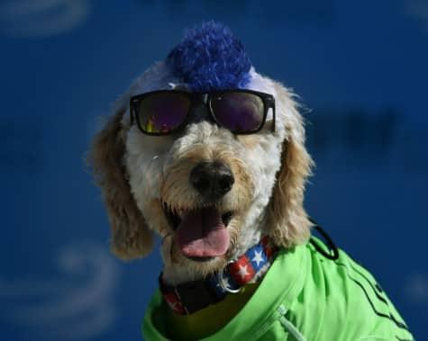 chiens-surfs-5