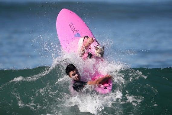 chiens-surfs-6