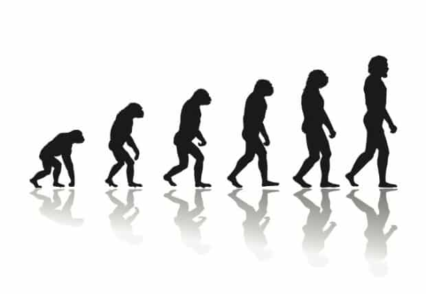 darwin-basique
