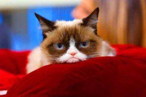grumpy-cat-00