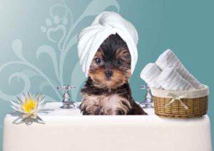 toilettage-chien