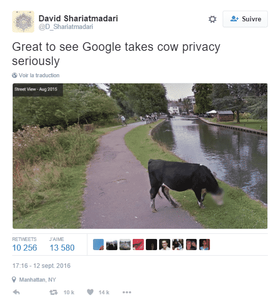 vaches-google-view