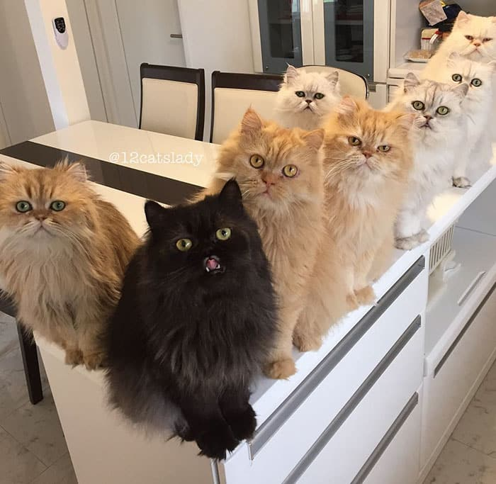 12catslady-1