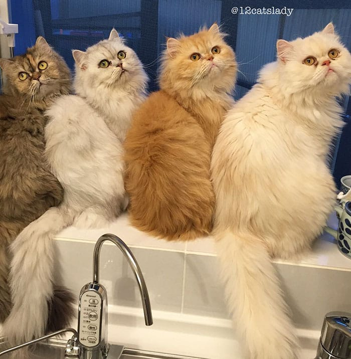 12catslady-5