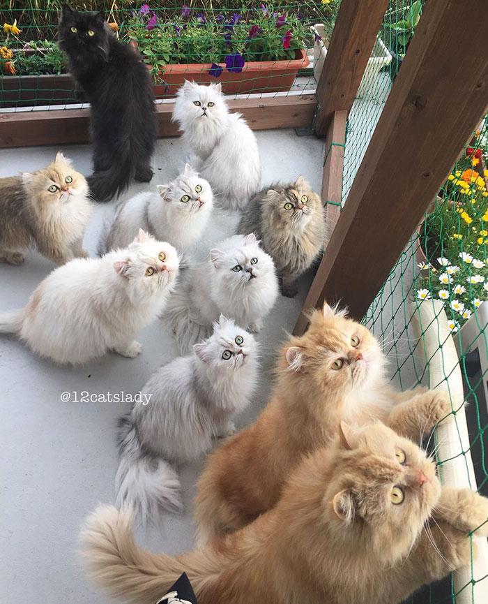 12catslady-6