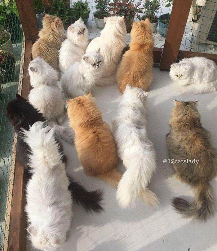 12catslady-9