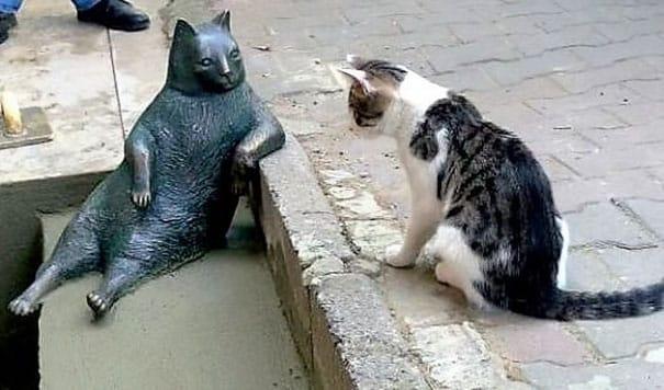 tombili-le-chat-3