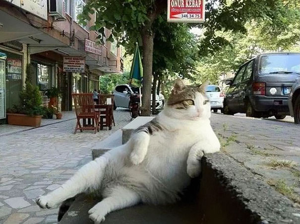 tombili-le-chat