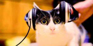 chat-musique