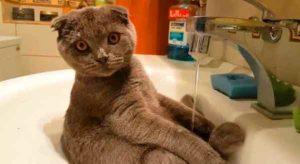 chat-robinet