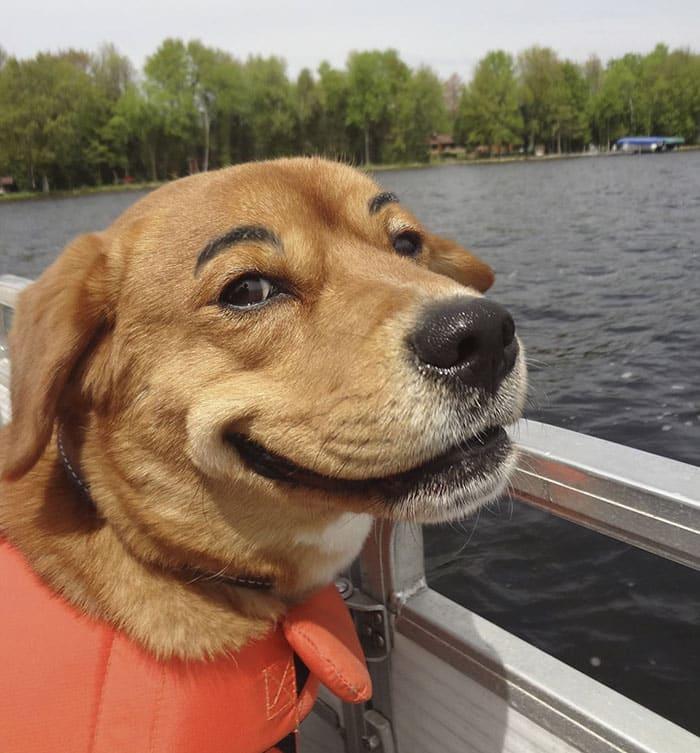 chien-avec-des-sourcils-1