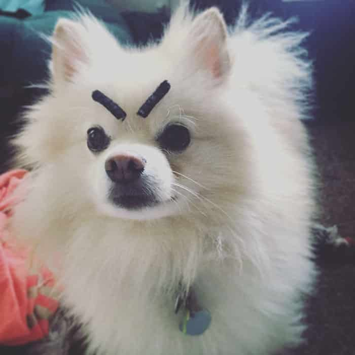chien-avec-des-sourcils-14