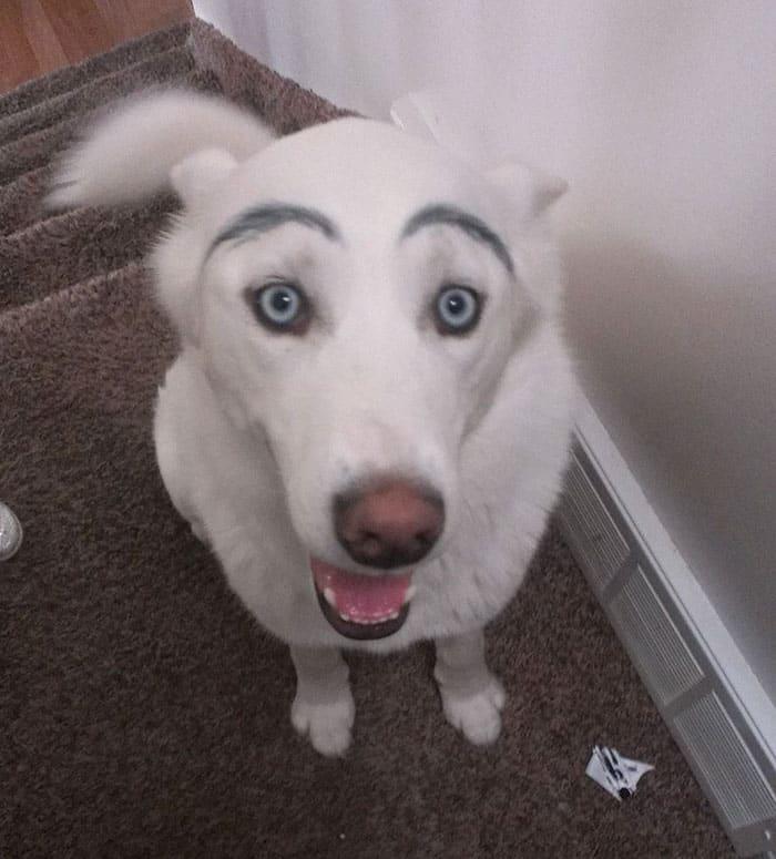 chien-avec-des-sourcils-19