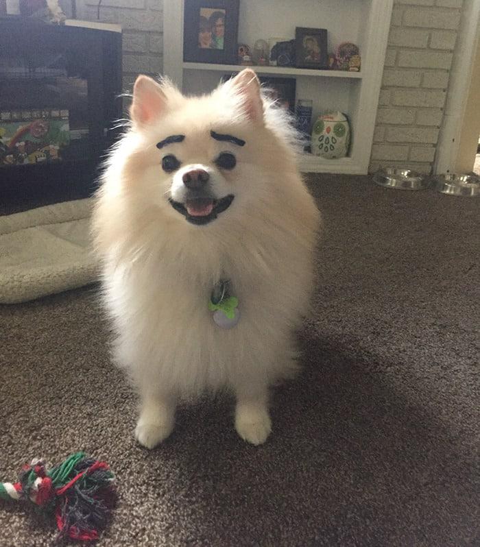 chien-avec-des-sourcils-5