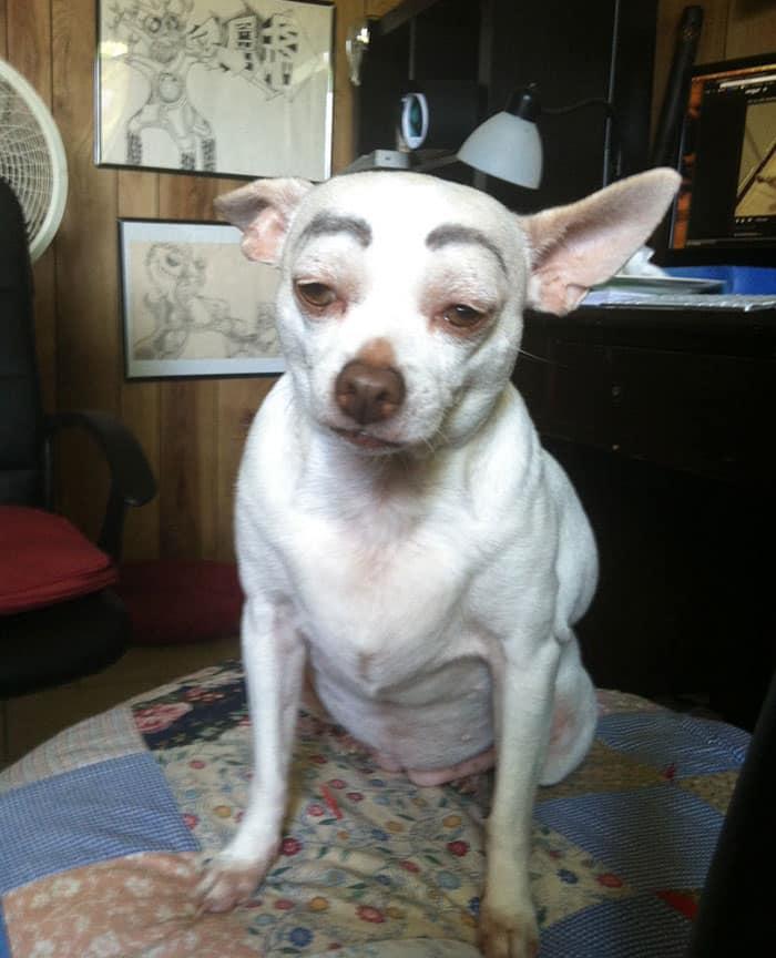 chien-avec-des-sourcils-8