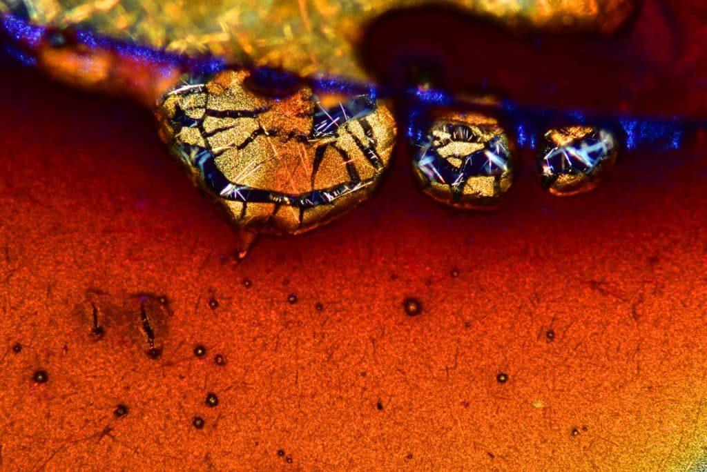 photos microscope