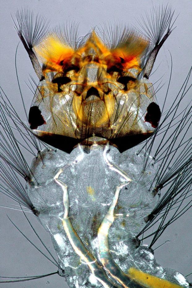 photos-microscope-8