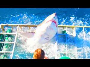 requin-cage-plongeur