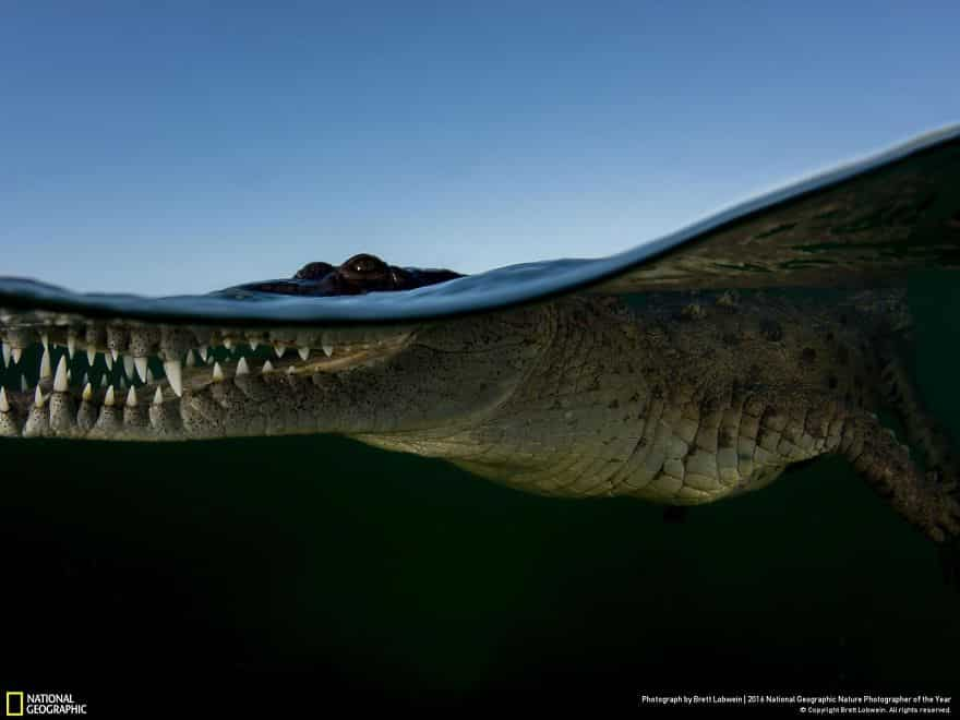 national-geographic-13