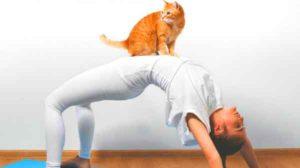 cat-yoga-atlanta