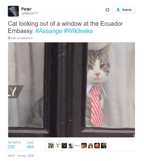 chat-assange