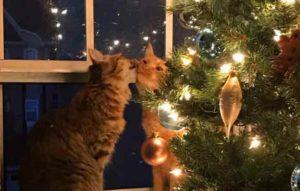 chats-romantiques-0